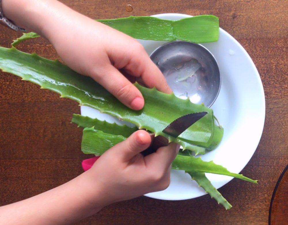 como cortar a folha de babosa