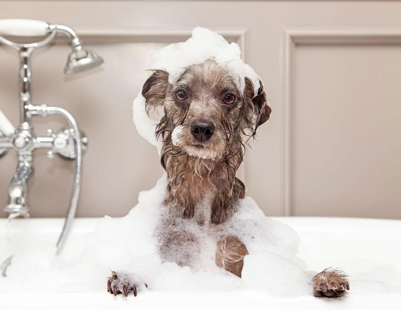 pode usar shampoo de cabelo em cachorro?